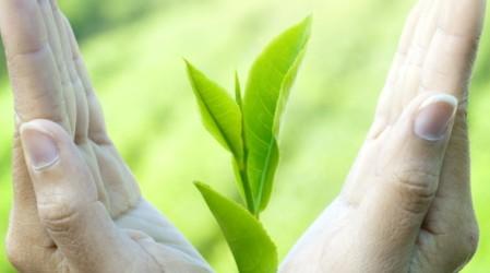 Té verde: ¿elixir de la vida o simplemente popularidad?
