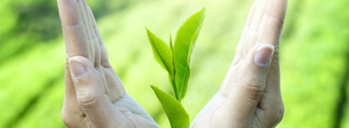 te-verde-salud