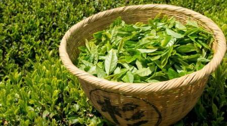 Té Verde: beneficios y riesgos para la salud