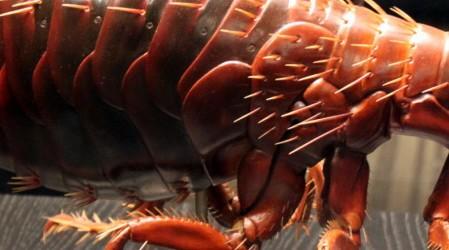Remedios caseros eficaces para las pulgas
