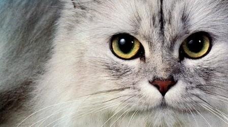 14 maneras de prevenir la formación de bolas de pelo en las mascotas