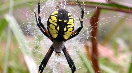 Cómo deshacerse de las arañas de forma natural