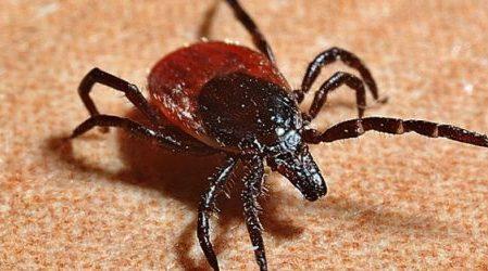 La picadura de un insecto puede causarte alergia a la carne